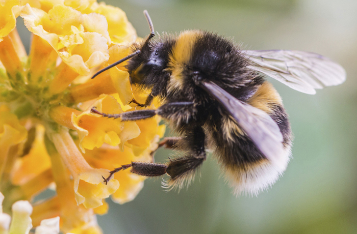 5 Easy Things You Can Do for Earth Day 2019 - Protect The Bees